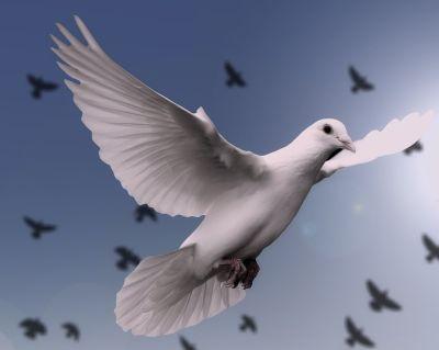 Laudato Si' Global prayer (5th anniversary)